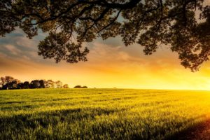 大地と朝陽
