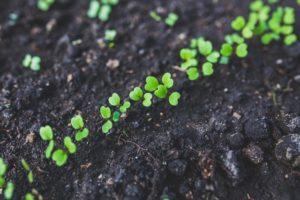 野菜の新芽たち2