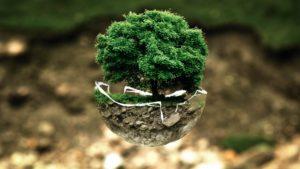 小さい器の中の自然