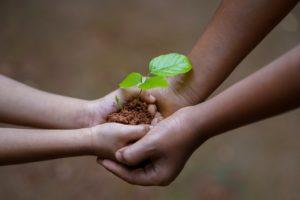 植物の新根を持つ手