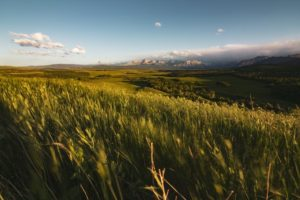 麦の大草原
