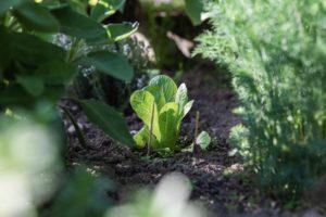野菜の新芽4