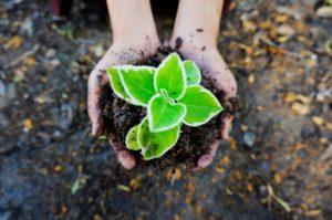 大きく育つ手の中の植物j